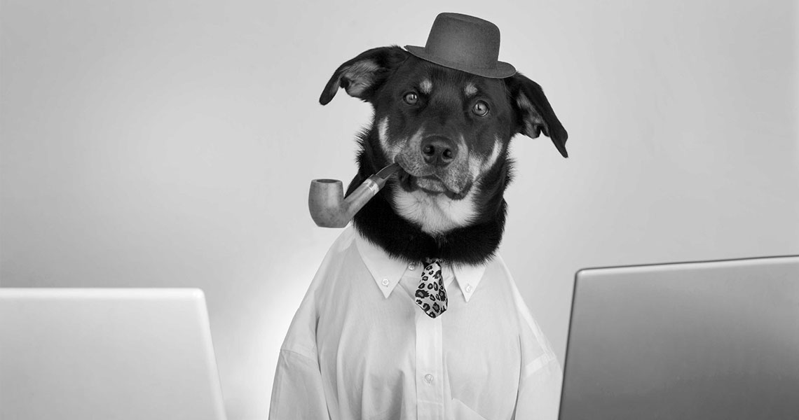 Hundefotografie Foto & Design